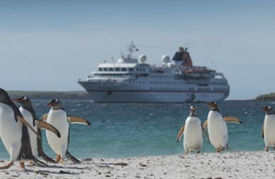 Thumbnail for Cruises to the Falkland Islands
