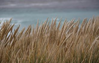 Grasses provide good habitats for wildlife in the Falklands