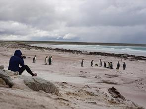 Top Hiking Trails and Walking Tips in the Falklands