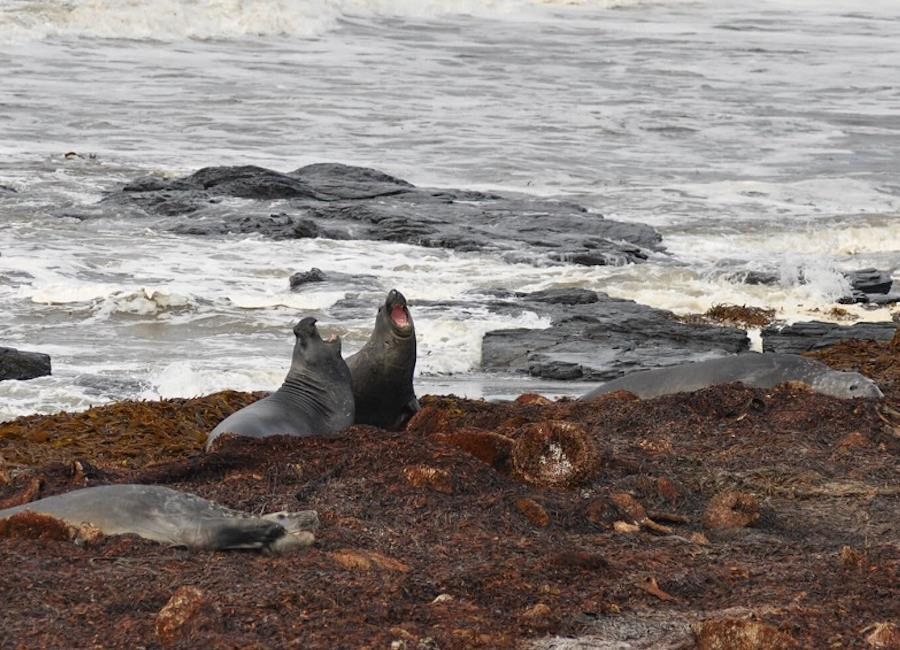 Wild About The Falklands - Falkland Islands Wildlife Guide