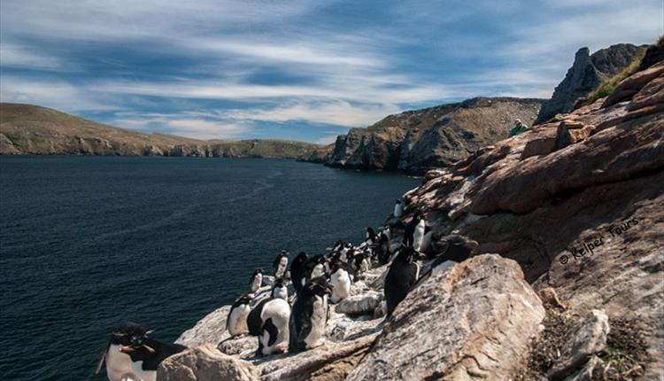 Kelper Tours - Falkland Islands - West Falklands