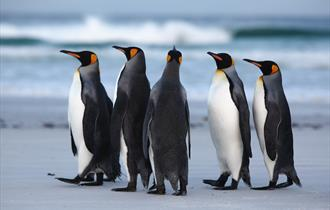 Adventure Falklands