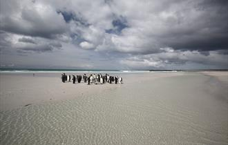 East Falkland Tours