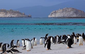 Enjoying the beaches of the Falkland Islands